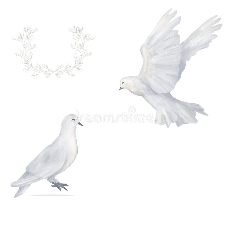 Zeichnungsaquarell-Vogelfliege des Taubencliparts blüht digitale die Illustration, die auf weißem Hintergrund ähnlich ist lizenzfreie abbildung