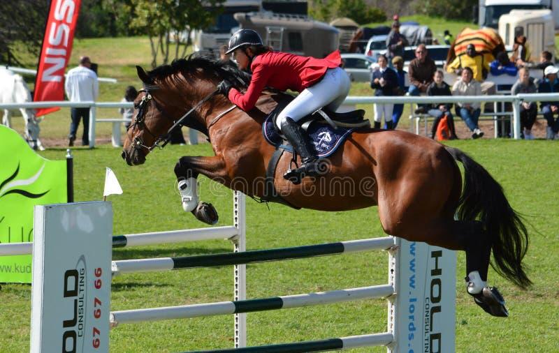 Zeigen Sie springendes Pferd und Mitfahrer lizenzfreie stockfotografie