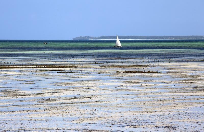 Zeilboot in ondiep water, Uroa, Zanzibar, Tanzania wordt vastgelegd dat stock foto's
