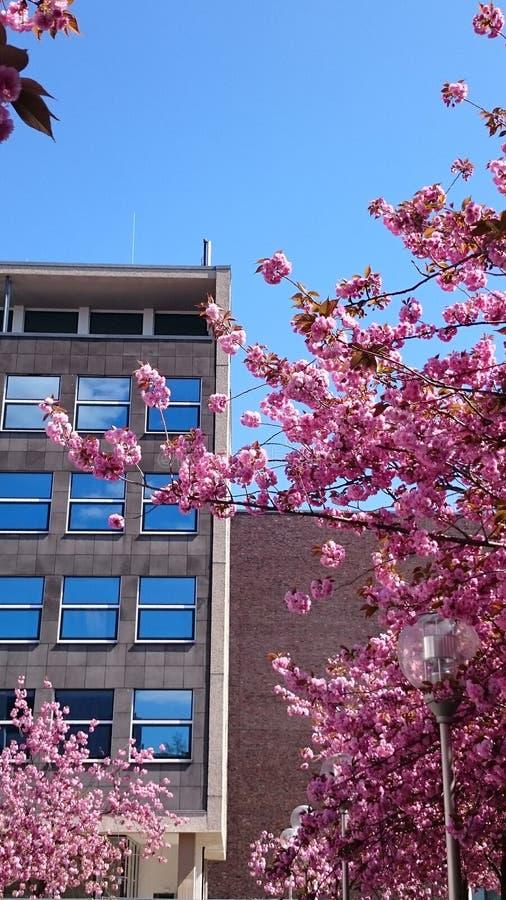 Zeile der blühenden Bäume des Frühjahrs stockfoto