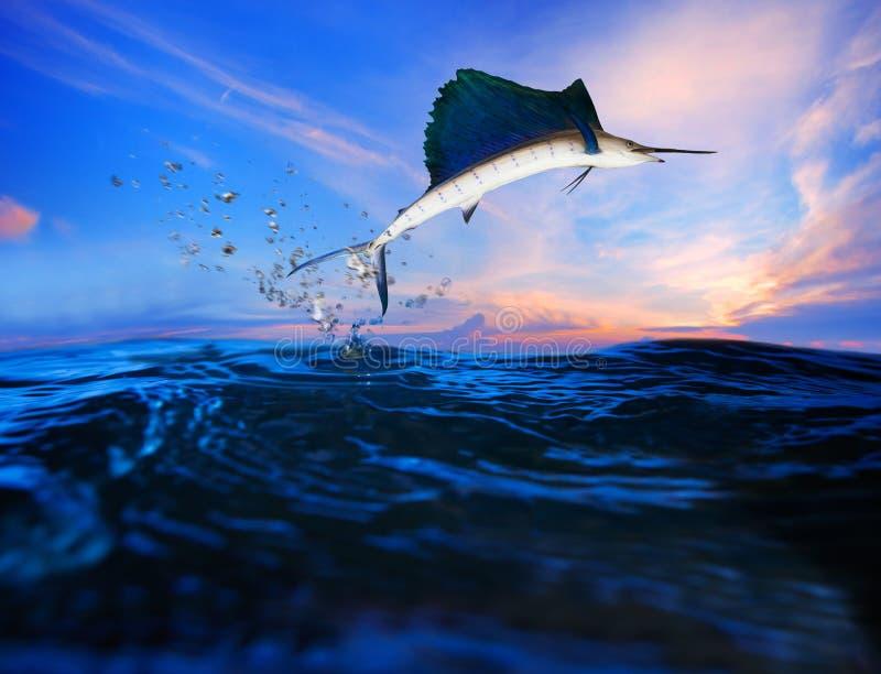 Zeilvis die over blauw overzees oceaangebruik voor het mariene leven en mooie aquatische aard vliegen royalty-vrije stock fotografie