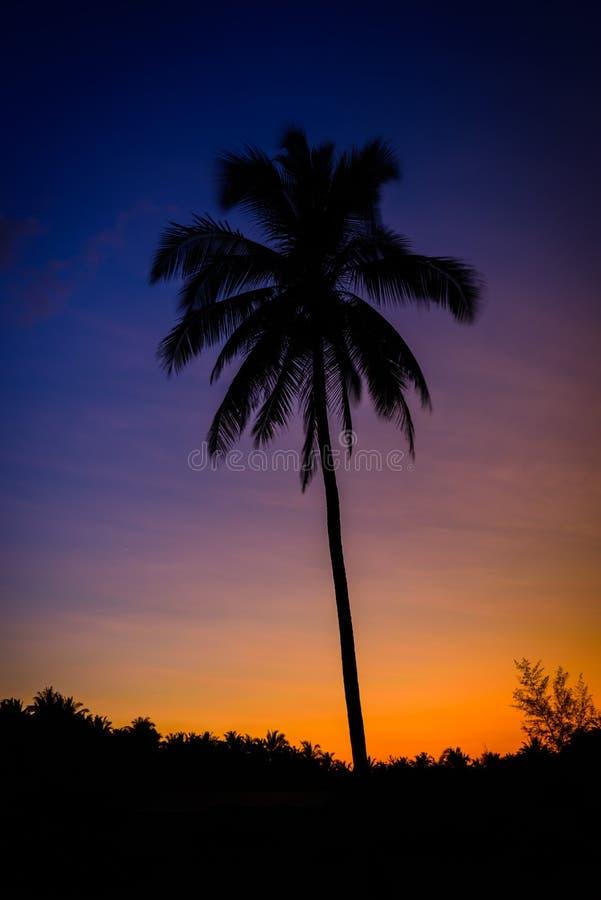 Zeit der Schattenbildkokosnuss-Palmen in der Dämmerung lizenzfreie stockbilder