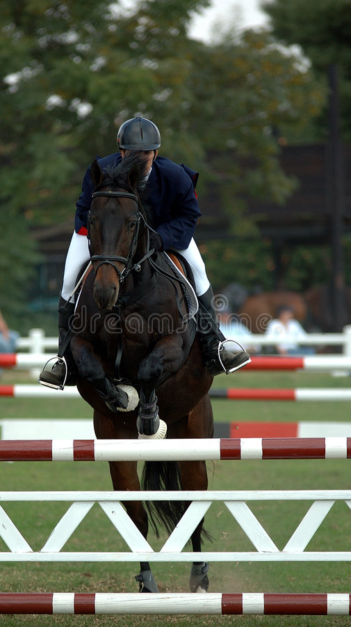 Zeker ruiter en paard royalty-vrije stock foto's