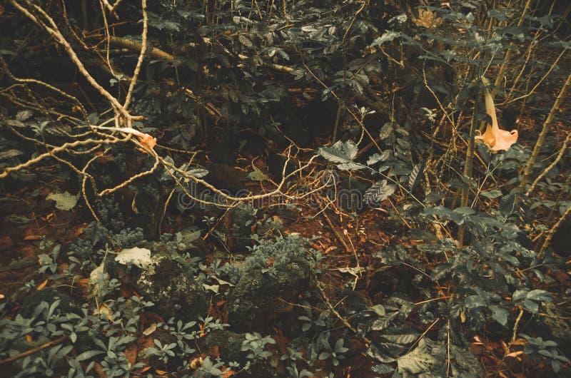 Zeldzame donkere gekleurde struiken en takken die groeien van stock afbeelding