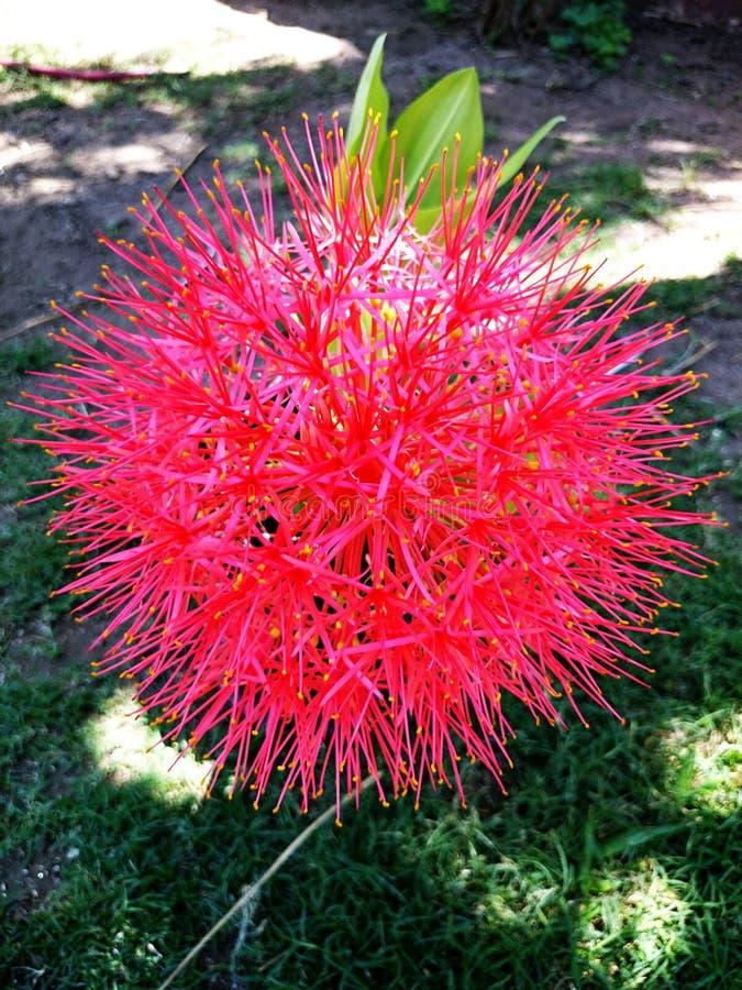 Zeldzame Roze Bloem royalty-vrije stock foto