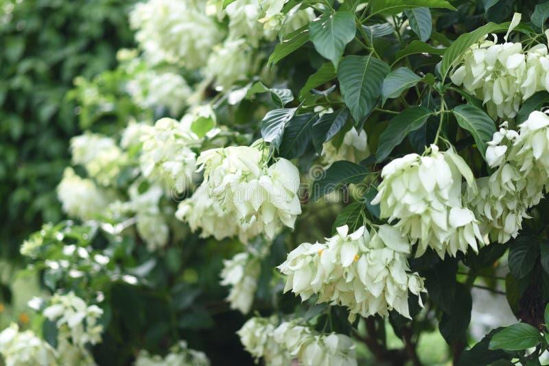 Zeldzame witte bloem stock afbeelding