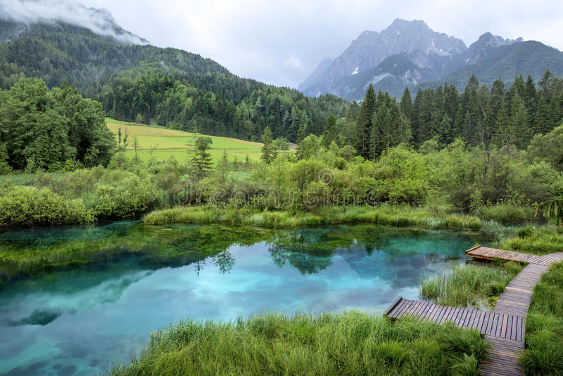 Zelenci staw blisko Kranjska Gora, Slovenia obrazy royalty free