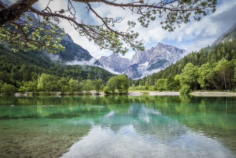Zelenci staw blisko Kranjska Gora w Triglav parku narodowym obraz royalty free