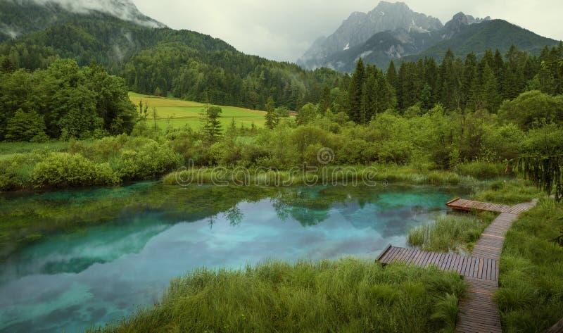 Zelenci staw w Triglav parku narodowym obraz royalty free