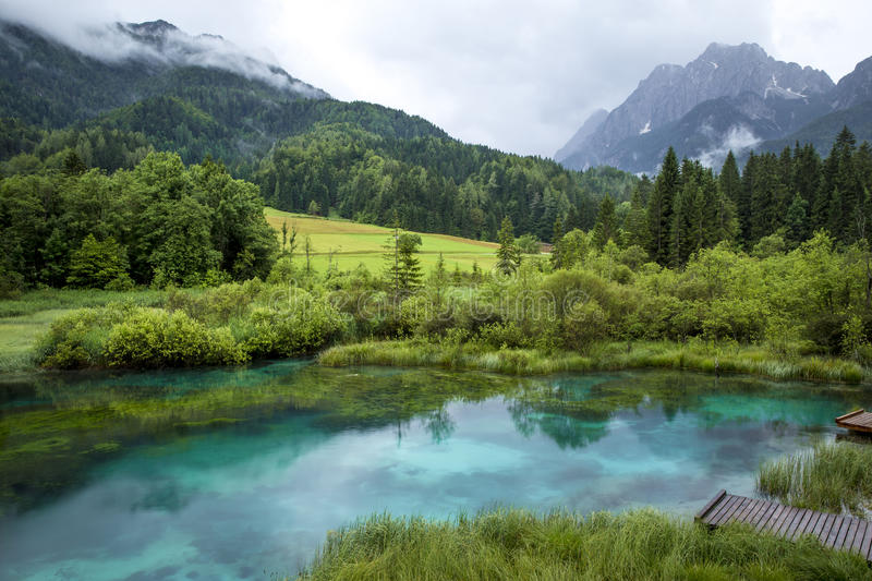 Zelenci-Teich in Slowenien stockbild