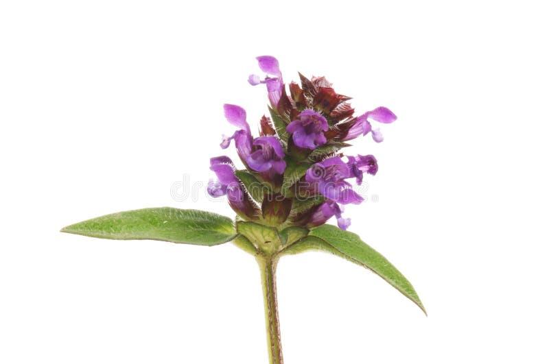 Zelf-heel bloemenclose-up royalty-vrije stock afbeelding