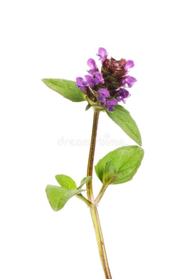 Zelf heel wildflower royalty-vrije stock foto's