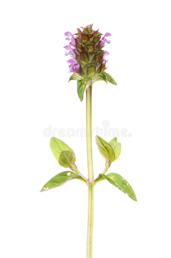 Zelf heel wildflower royalty-vrije stock afbeelding