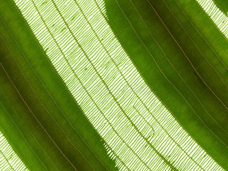 Zellen des Blattes stockbild