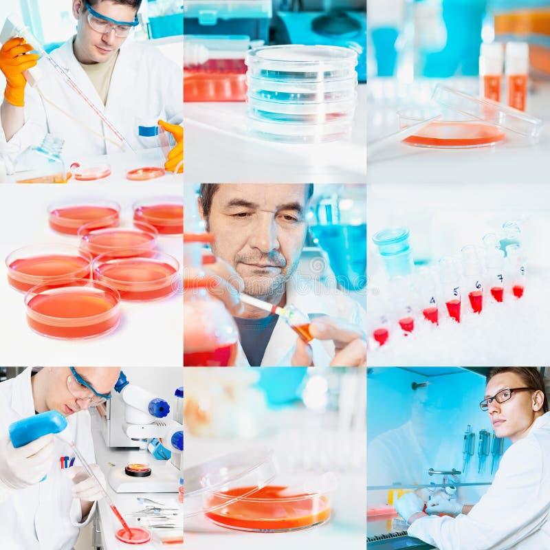 Zellkulturarbeit im Labor, Collage stockbild