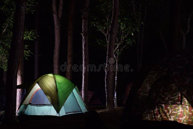 Zeltlager in einem Kiefernwald stockbild