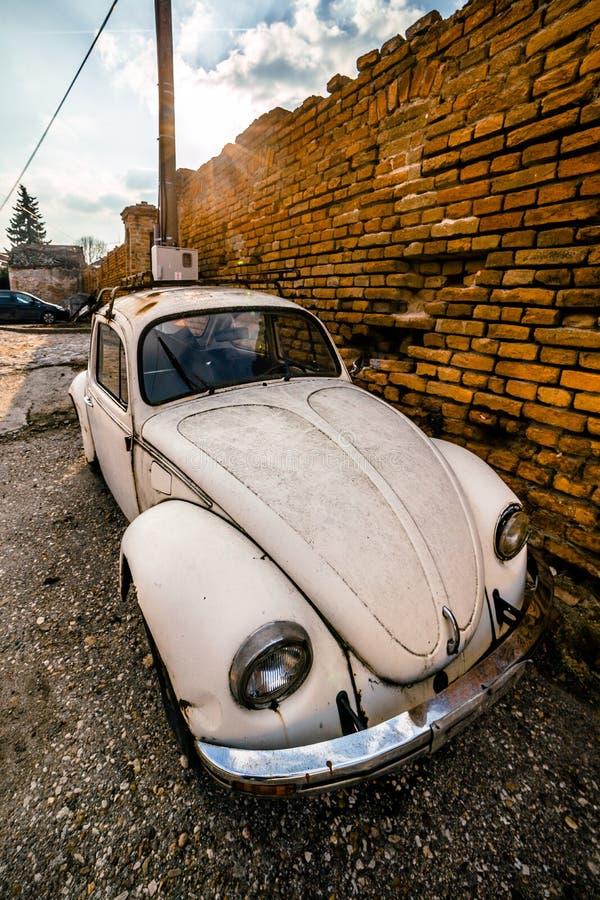 Zemun, Servië - 17 Februari 2019 - Oud geroest wit die Volkswagen Beetle naast oranje bakstenen muur wordt geparkeerd royalty-vrije stock afbeelding