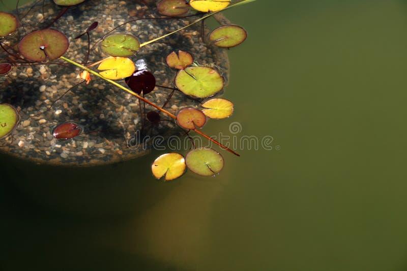 Zen lizenzfreie stockfotografie