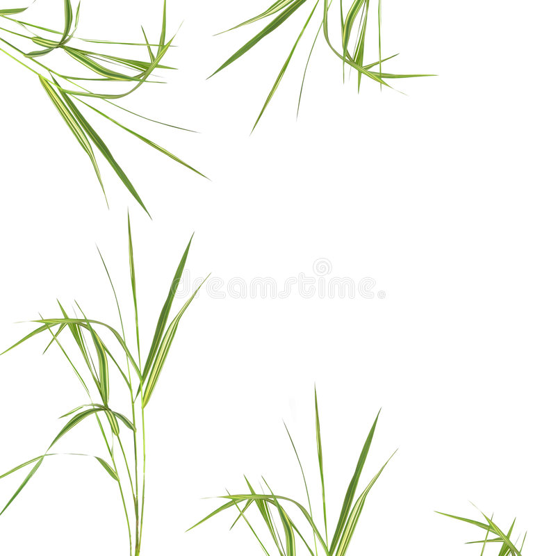 Zen Abstract Bamboo Grass. Zen abstract of bamboo grass over white background stock image
