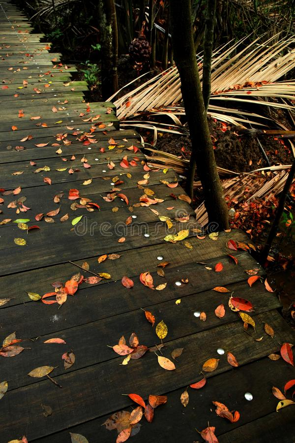 Zen Background - Autumn Colors. A zen-like background of leaves in a variety of autumn colors against a boardwalk floor after a heavy rain, symbolizing peace stock images