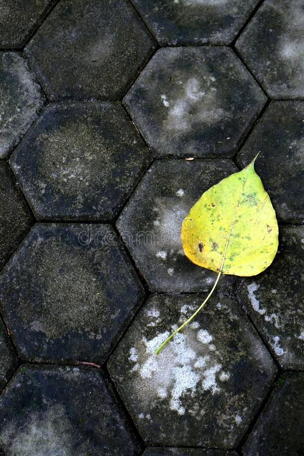 Zen Background - Leaf on the Floor. A zen-like background of a leaf against a black tiled floor, symbolizing peace, contrast, minimalism, zen, tranquility and stock photo