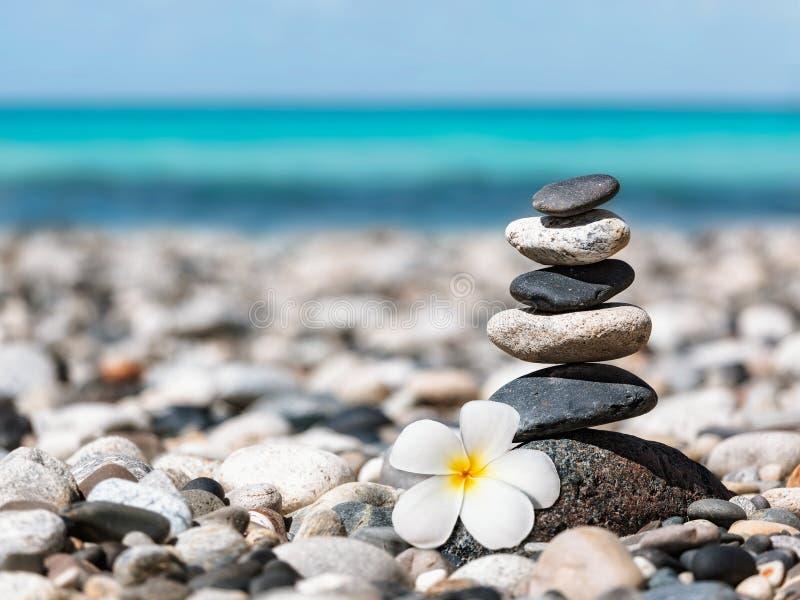Zen balanced stones stack with plumeria flower royalty free stock image
