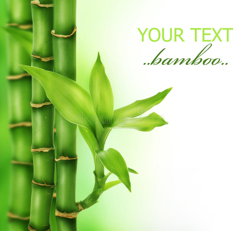 Zen Bamboo. Beautiful Bamboo over blurred background.Copy space stock image