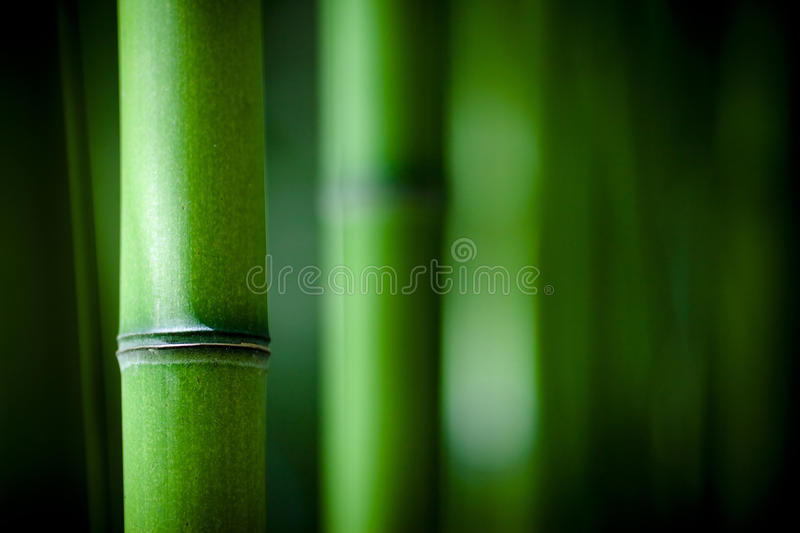 Zen bamboo royalty free stock images