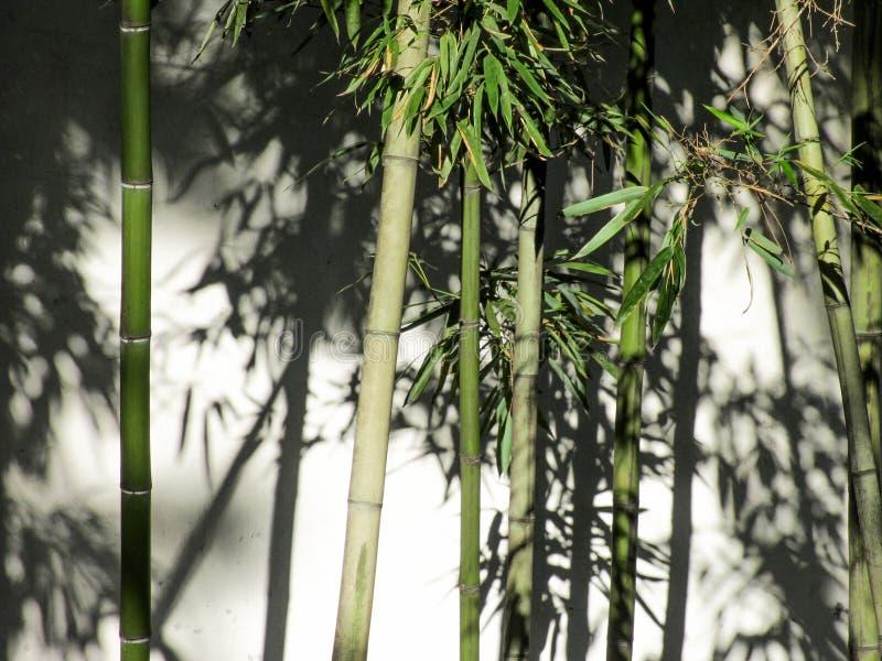 Zen Bamboo royalty free stock photos