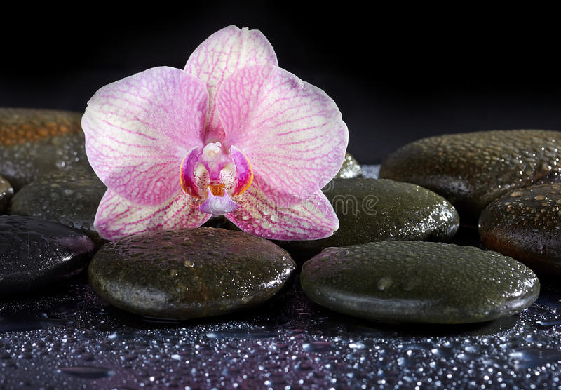 Zen basalt stones and orchid stock photography