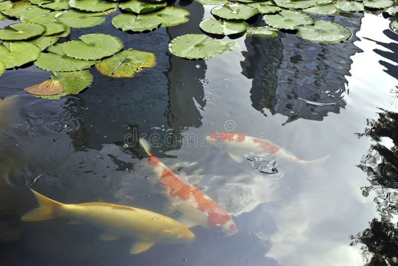 Zen de Tokio imagen de archivo libre de regalías