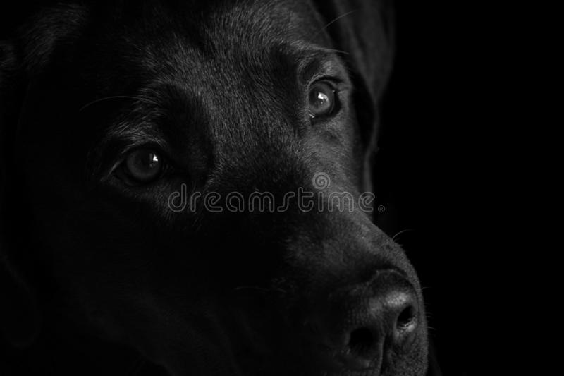 Zen der Hund meiner Freunde lizenzfreie stockbilder