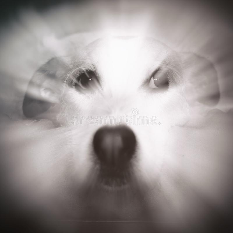 Zen Dog Portrait imagem de stock royalty free