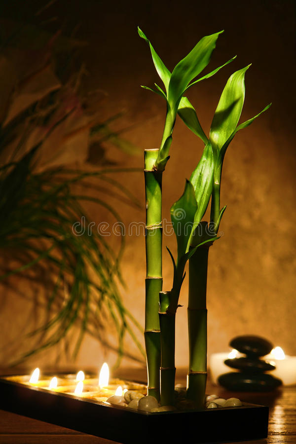 Zen Meditation Candles and Bamboo Plants royalty free stock image