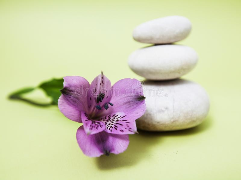 Zen Meditation Spa Lifestyle. Balanced stones and flower royalty free stock photography