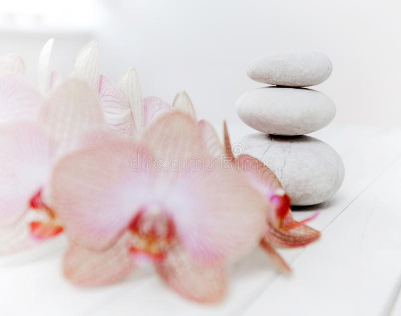Zen Meditation Spa Lifestyle. Balanced stones and flower orchids on white wooden background stock photography