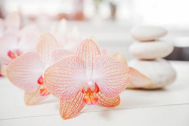Zen Meditation Spa Lifestyle. Flower orchid and balanced stones on white wooden background royalty free stock images