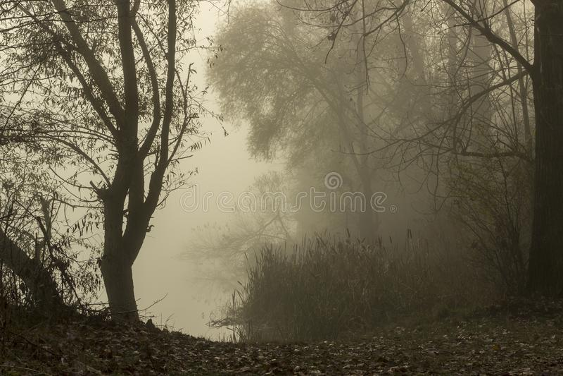 zen mgłę znad jeziora obrazy stock