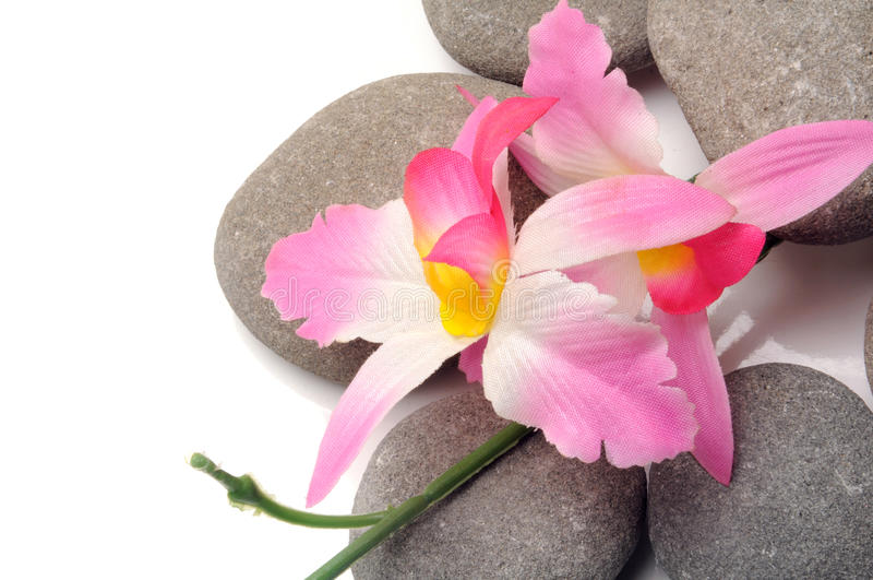 Zen path royalty free stock photography