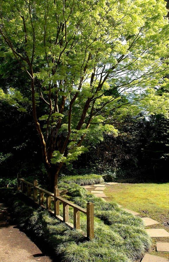 A Zen path stock image