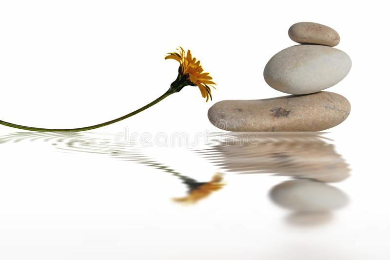Zen pebbles with yellow daisy flower and the reflection on white background stock photo