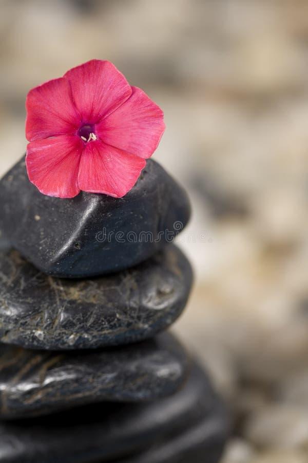 Download Zen and Phlox stock photo. Image of phlox, purple, east - 17029466