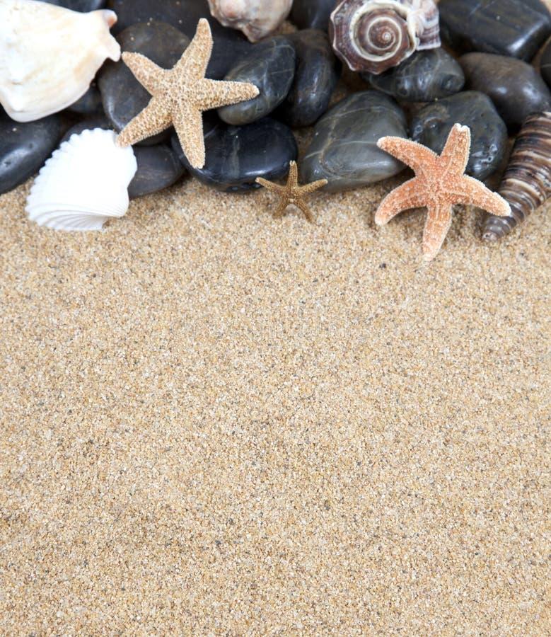 Zen spa rivierrotsen en shells  stock foto