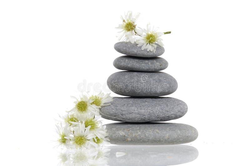 Zen still life. Reflection of zen stones with daisies stock photos