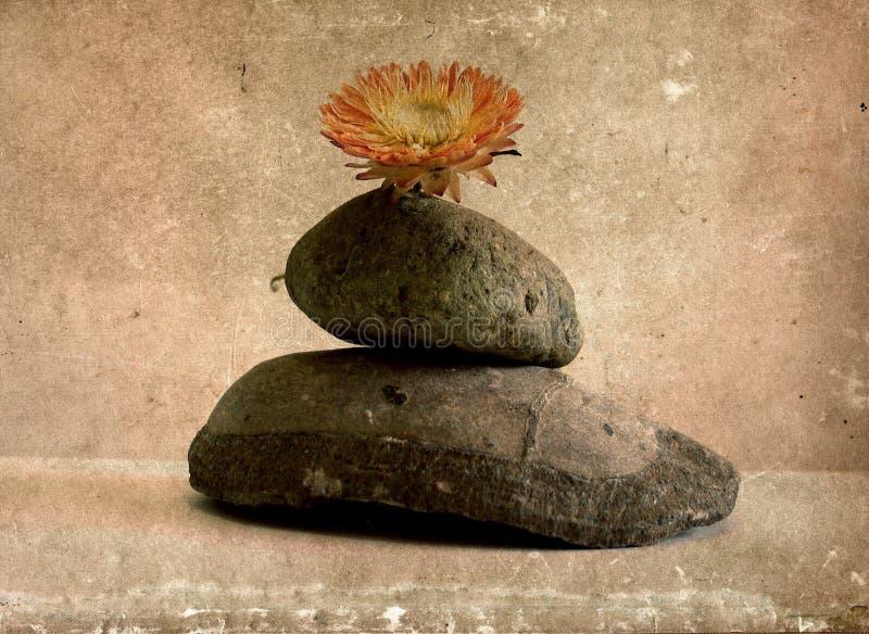 Zen still life with flower stock photo
