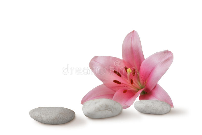 Zen still life: pebbles and pink lily. Wellness still life pebbles and pink lily, high key studio shot royalty free stock photography