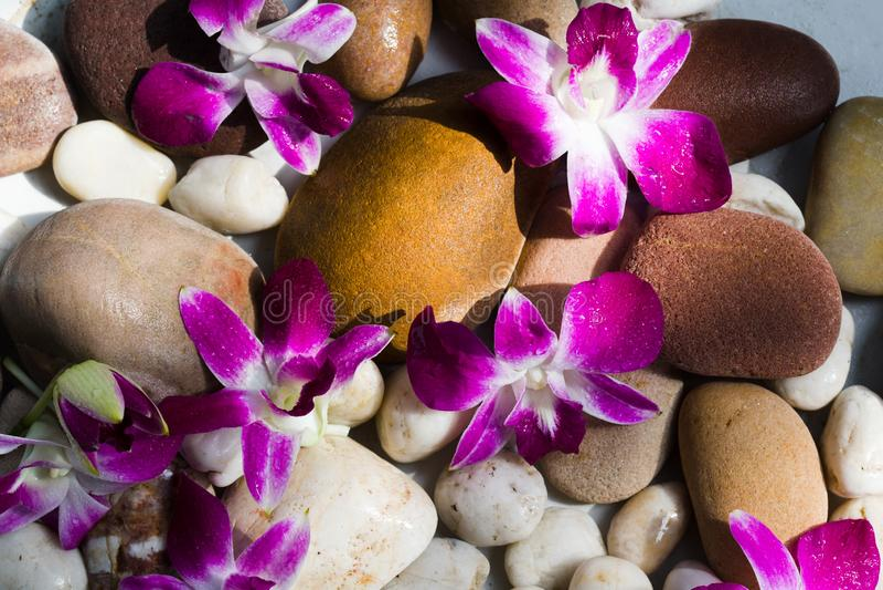 Zen Stones avec la lumière rose de matin d'orchidée photo libre de droits