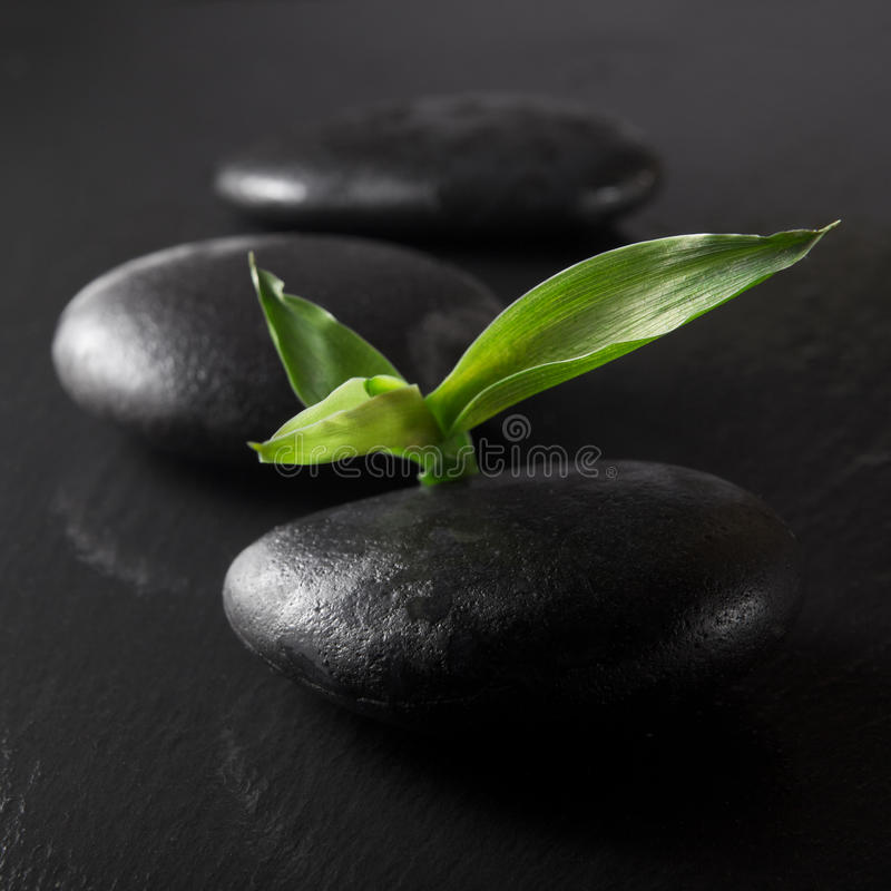 Zen stones and bamboo. On the black stock image