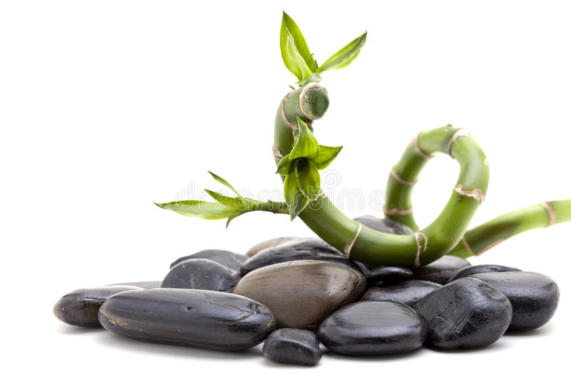 Zen stones with bamboo plant. Pile of shiny zen pebble stones with bamboo plant, isolated on white background, copy space stock photos