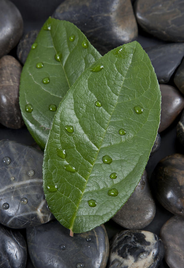 Zen stones and leaves with water royalty free stock images